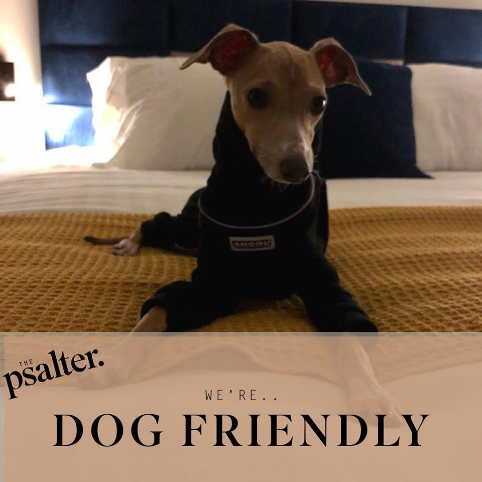 The Psalter welcomes dogs