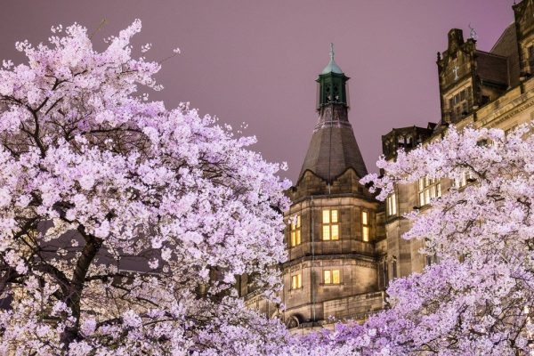 IMG N2120 Town Hall through the blossom